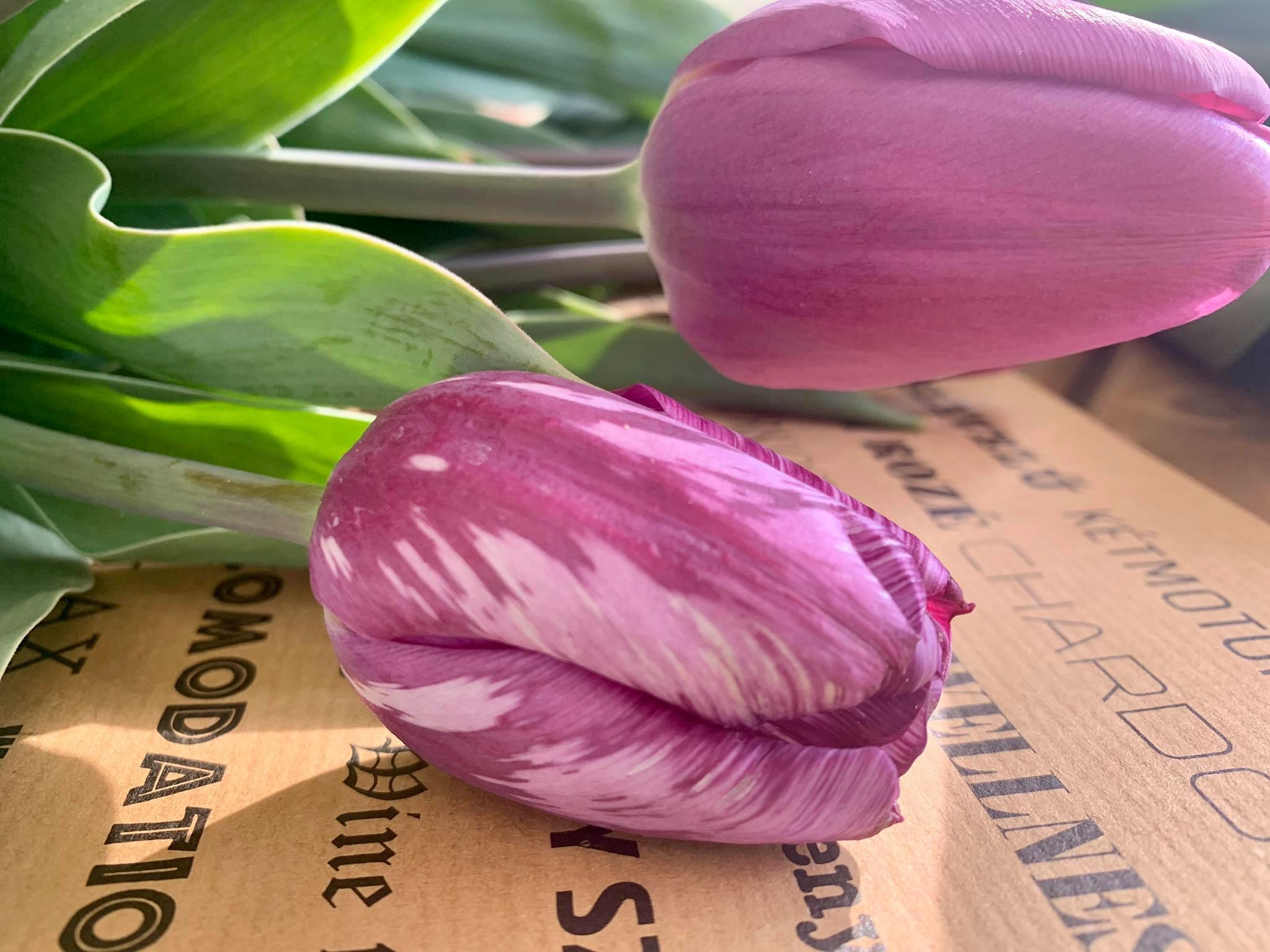 Tulipgarden Cegléd